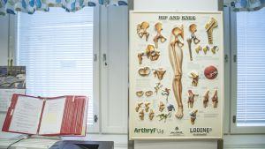 Lonkan ja polven anatomiataulu