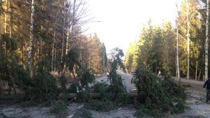 Kaatunut puu tiellä Hennalassa.