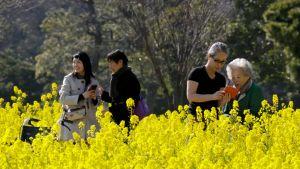 Kukat kukkii Tokiossa
