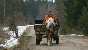 suomenhevonen vetää keväällä soratiellä kärryjä, ohjaimissa hevosen omistaja Heini Kuukka, huhtikuu