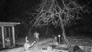 saunojat kierivät lumessa