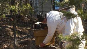 Mehiläispesää laitetaan tuotantokuntoon.