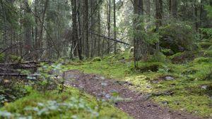 Polku kulkee metsässä.