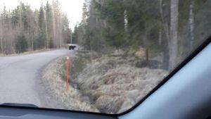 Karhu Hyvinkäällä auton ikkunasta kuvattuna.