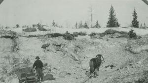 Hevonen töissä Kalkkimaan kaivoksella.