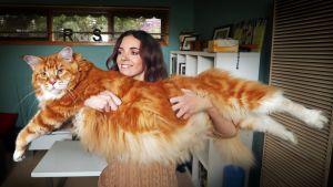 Omar,  maailman pisin kissa.