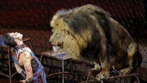 leijonankesyttäjä ja leijona