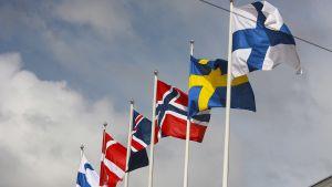 Pohjoismaiden liput liehuvat kaupungintalon edustalla.
