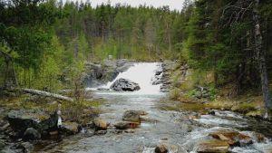 Ravadasputous Lemmenjoen kansallispuistossa.