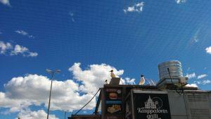 Kolme naurulokkia tähystää saalista Kauppatorin laidalla sijaitsevan grillikioskin katolla.