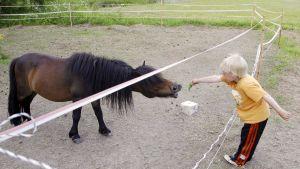 Lapsi syöttää ponia maatalon pihalla.