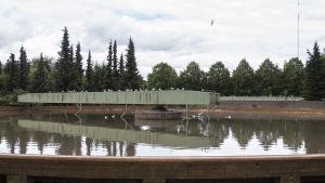 Jätevettä ja lokkeja Tampereen Viinikanlahden jätevedenpuhdistamon altaassa