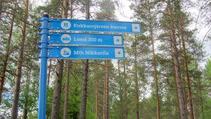 Sinisiä reittimerkkejä metsässä.