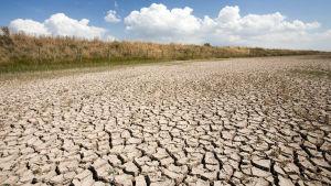 Kuivunutta järvenpohjaa Andaluciassa etelä-Espanjassa.