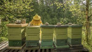 Mehiläispesiä rivissä.