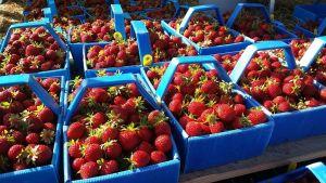 mansikoita rasioissa mansikkarasiat kypsiä mansikoita mansikka mansikat