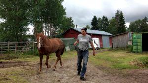 Ville Korjus taluttaa suomenhevosori Välähdystä