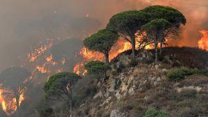Palavaa maastoa Messinan lähellä heinäkuussa Messinan lähellä, Italiassa.