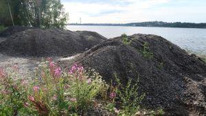 Nollakuitua kasoina Tampereen Hiedanrannassa