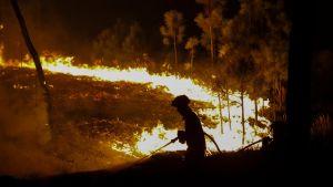 Palomies sammuttaa maastopaloa pimeässä.