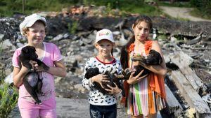 kolme tyttöä ja jokaisella koiranpentu sylissä