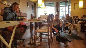 Koiria Nina Mimossa kahvilassa Kuusamossa.
