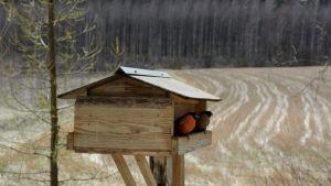 Punatulkkuja lintulaudalla syömässä