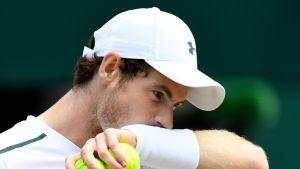 Andy Murray pyyhkii hikeä.