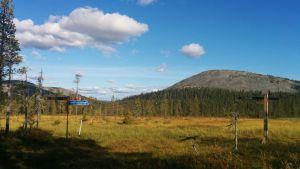 Pallas-Yllästunturin kansallispuisto
