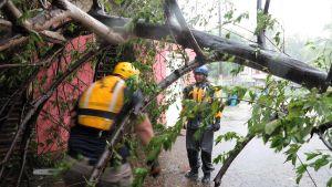Pelastustyöntekijät raivasivat kaatuneita puita Puerto Ricossa 6. syyskuuta.