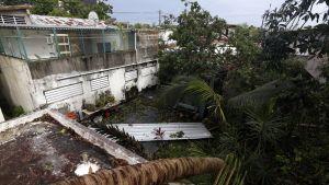 Talon päälle on kaatunut palmu. Maassa on kattopellin palanen.