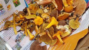 Erilaisia sieniä korissa