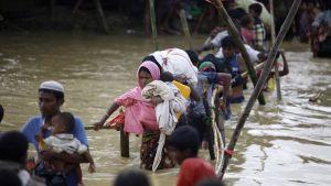 Rohingya-pakolaiset ylittävät pientä kanavaa bambusta tehtyä siltaa pitkin. Vesi on ihmisiä vyötäisille asti.