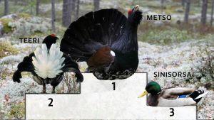 Lintujen Suomenmestaruskisojen kolmen kärki biomassalla mitattuna