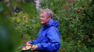 Mies kantaa korissa omenia sateisessa omenatarhassa