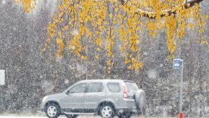 Lumisade ja ruskapuita.