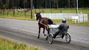 Jani Ruotsalainen ja Rallston-ravihevonen kotiradalla harjoituksissa.
