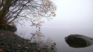 Sumuinen järven ranta