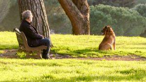 mies ja koira puistossa