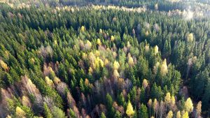 Ilmakuva metsästä Lempäälässä.
