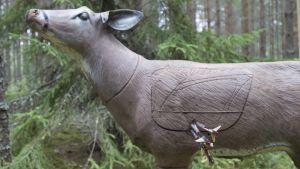 Metsästys, jousimetsästys, maalitaulu, kauris.