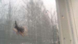 Höyheniä ikkunassa