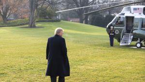 Yhdysvaltain presidentti Donald Trump kävelee kohti helikopteria.