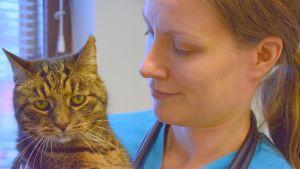 Pieneläinsairauksien erikoiseläinlääkäri Anu Valtonen ja hänen Pipo-kissansa mikkeliläisessä Eläinklinikka Kurjessa (perusmuodossa: Eläinklinikka Kurki)