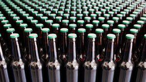 Paljon etiketittömiä olutpulloja vierekkäin.