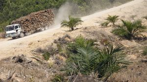 Tukkirekka Riaun maakunnassa Indonesiassa.