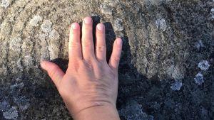 Kivihakkaus löytyi Ruissalon Kuuvannokasta, mutta etsintä vaati kylmää kylpyä.