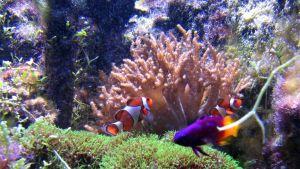 Korallreven är känsliga miljöer. Bild: YLE/Mika Kanerva