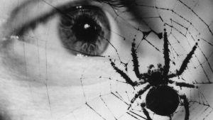silmä katsoo hämähäkkiä, joka on verkossa