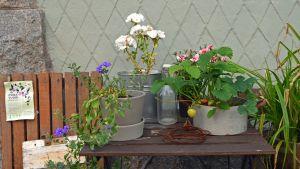Visste du att man kan växa blommor på trottoarer?